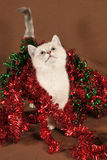 Really cute intrigued christmas kitten Royalty Free Stock Photo