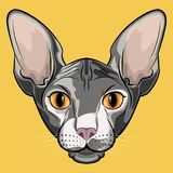 Cute isolated grey sphinx cat face royalty free illustration