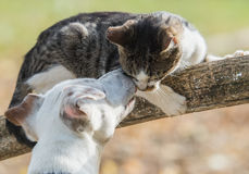Cute jack russel dog and kitten best friends Royalty Free Stock Photos