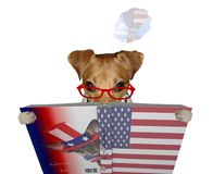 Cute jack russel dog read a book for Independence Day and dream for traven to USA royalty free stock photography