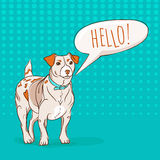 Cute Jack Russel Terrier dog saying HELLO to you Stock Images