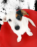 Cute Jack Russell sitting on a red stool Royalty Free Stock Image