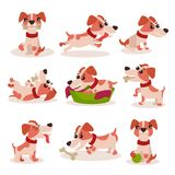 Cute jack russell terrier characters set, funny dog in different poses and situations vector Illustrations Royalty Free Stock Image