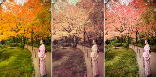 Cute Japanese girl is standing calmly in autumn wilderness lands Stock Photos