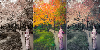 Cute Japanese girl is standing calmly in autumn wilderness lands Stock Photography