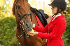 Jockey to feed horse with apple. A cute jockey girl feeding a horse with an apple outdoors. Thanks for the workout. A pedigree horse for equestrian sport stock photos