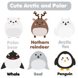 Cute kawaii arctic and polar animals. Children style, isolated design elements, vector. Seal, whale, penguin. Cute kawaii arctic and polar animals set. Reindeer stock illustration