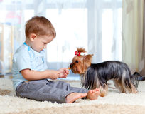 Cute kid boy feeding pet dog york Stock Photos