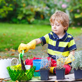 Cute kid boy learning to plant flowers in home's garden. Or farm, on warm sunny day. Outdoors. Environment concept royalty free stock photo