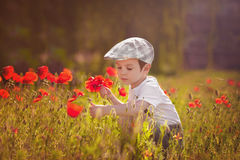 Cute kid boy with poppy flower on poppy field on warm summer day Stock Images