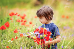 Cute kid boy with poppy flowers and other wild flowers in poppy Royalty Free Stock Photos