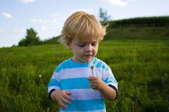 Cute Kid with Dandelion. Little boy blowing on a dandelion in a field Stock Photography
