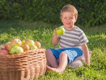 Cute kid eating fruits outdoor. Fruit garned. Basket full of ripe appels. royalty free stock photo