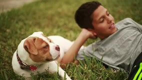 Cute kid laying down in grass with adorable dog stock video footage