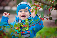 Cute kid picking up small wild red apples Royalty Free Stock Photography