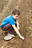 Cute kid planting garlic Royalty Free Stock Image
