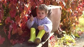 Cute kid sitting on autumn fallen leaves in a park. Small and very cute boy in vintage clothes with suitcase on autumn. Leaves background stock video footage