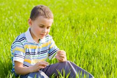 Cute kid in a wheat field Stock Image