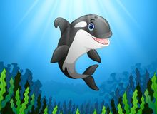 Cute killer whale under water. Illustration of Cute killer whale under water Stock Photography