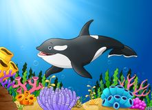 Cute killer whale under water. Illustration of Cute killer whale under water Royalty Free Stock Image