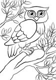 Cute kind owl sitting on the tree in the forest. Cute kind owl sitting on the big branch of the tree in the forest Royalty Free Stock Photo