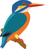 Cute kingfish vector. Cute colorful fat kingfisher vector stock illustration