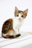 Cute kitten. Closeup of cute young kitten with white background Stock Photos