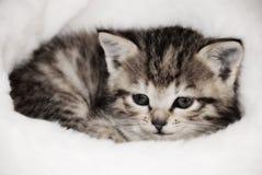 Cute kitten. Sleeping in the Santa's cap royalty free stock photography
