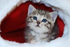 Cute kitten. In a Santa's cap royalty free stock photos