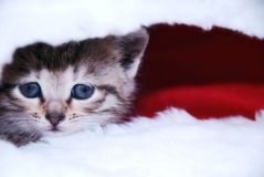 Cute kitten. In a Santa's cap stock images