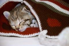 Cute kitten. Sleeping in a winter hat stock photo