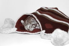 Cute kitten. Sleeping in a winter hat royalty free stock image