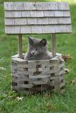 Cute kitten. Kitten sitting in wishing well in October royalty free stock photos