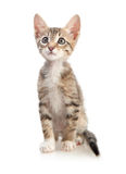 Cute kitten. On white background Royalty Free Stock Photography