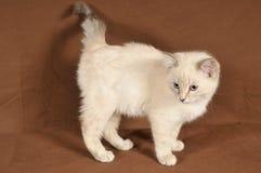 Really cute kitten Stock Image