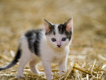 Free Cute Kitten Royalty Free Stock Photo - 18668355
