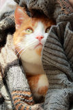 Cute kitten. Looks out a knitted rug Royalty Free Stock Image