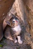 Cute kitten. Little kitten near old wall is looking with blue eyes Stock Photos