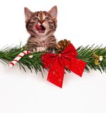 Cute kitten. Portrait of cute christmas kitten with empty board on white background Royalty Free Stock Photos