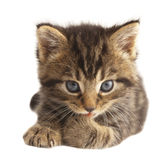 The cute kitten. Stock Photo