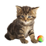 The cute kitten. Royalty Free Stock Image