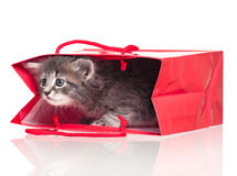 Cute kitten. Cute little kitten in a gift bag  on white background Royalty Free Stock Photos