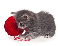 Cute kitten Stock Image