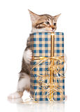 Cute kitten. Cute little kitten with gift pack  on white background Stock Photos