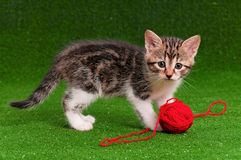 Cute kitten. Playing red clew of thread on artificial green grass stock photos