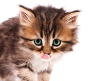 Cute kitten_4(19).jpg Royalty Free Stock Images