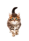 Cute kitten_5(19).jpg Royalty Free Stock Image
