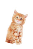 Cute kitten. Cute foxy-red kitten sitting on white background Stock Photos