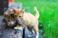 Cute kitten. Parent-child activities Cute kitten Royalty Free Stock Photo