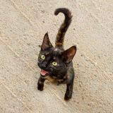 Cute kitten asks for food. The cat has an unusual turtle color and bright yellow eyes. Selective focus stock photography